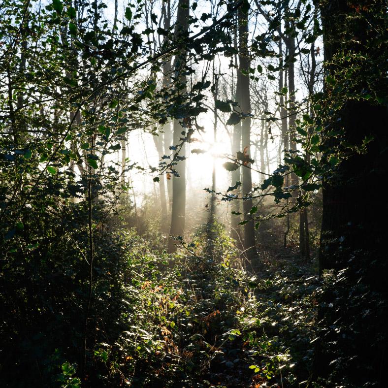 Flâneur in an Ancient Landscape