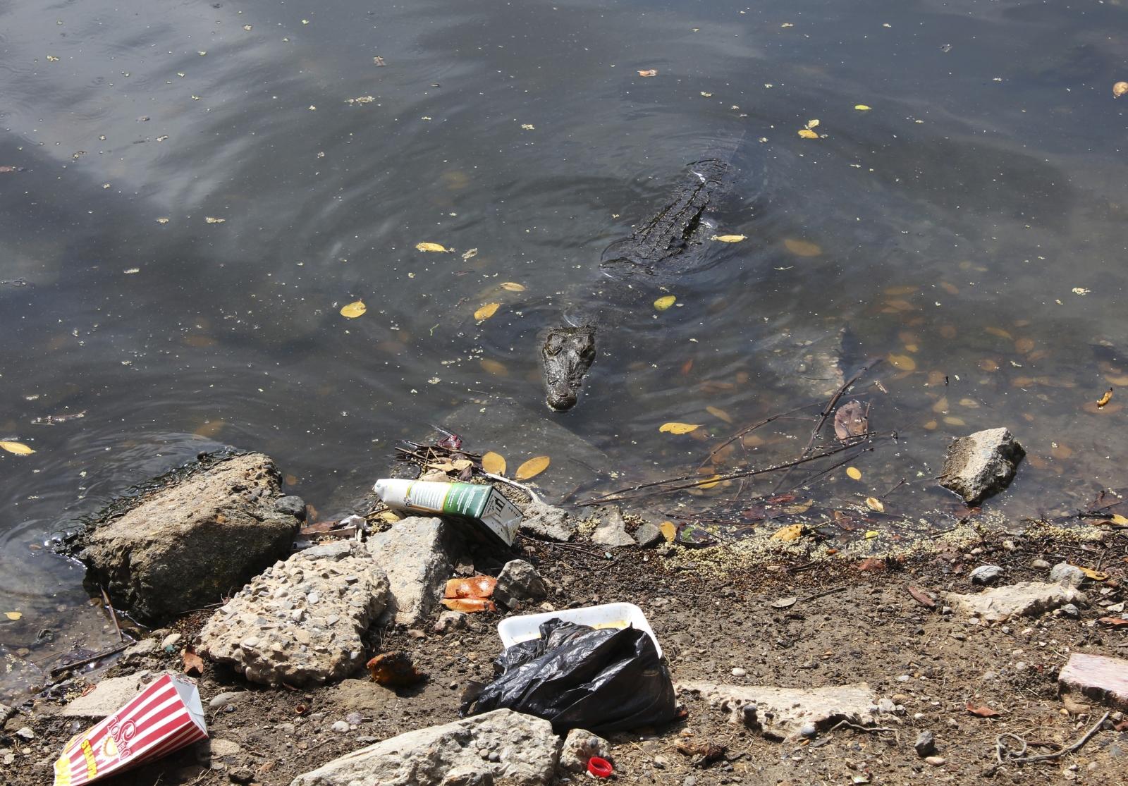 crocodile Mexico man-eaters