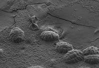 tardigrade survival