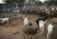 Namibia farms
