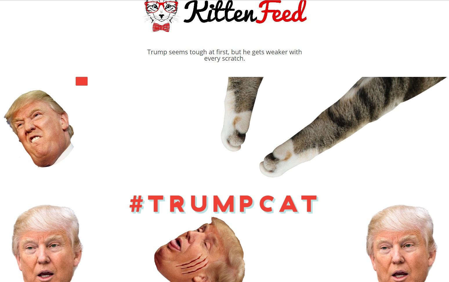 Kitten Feed