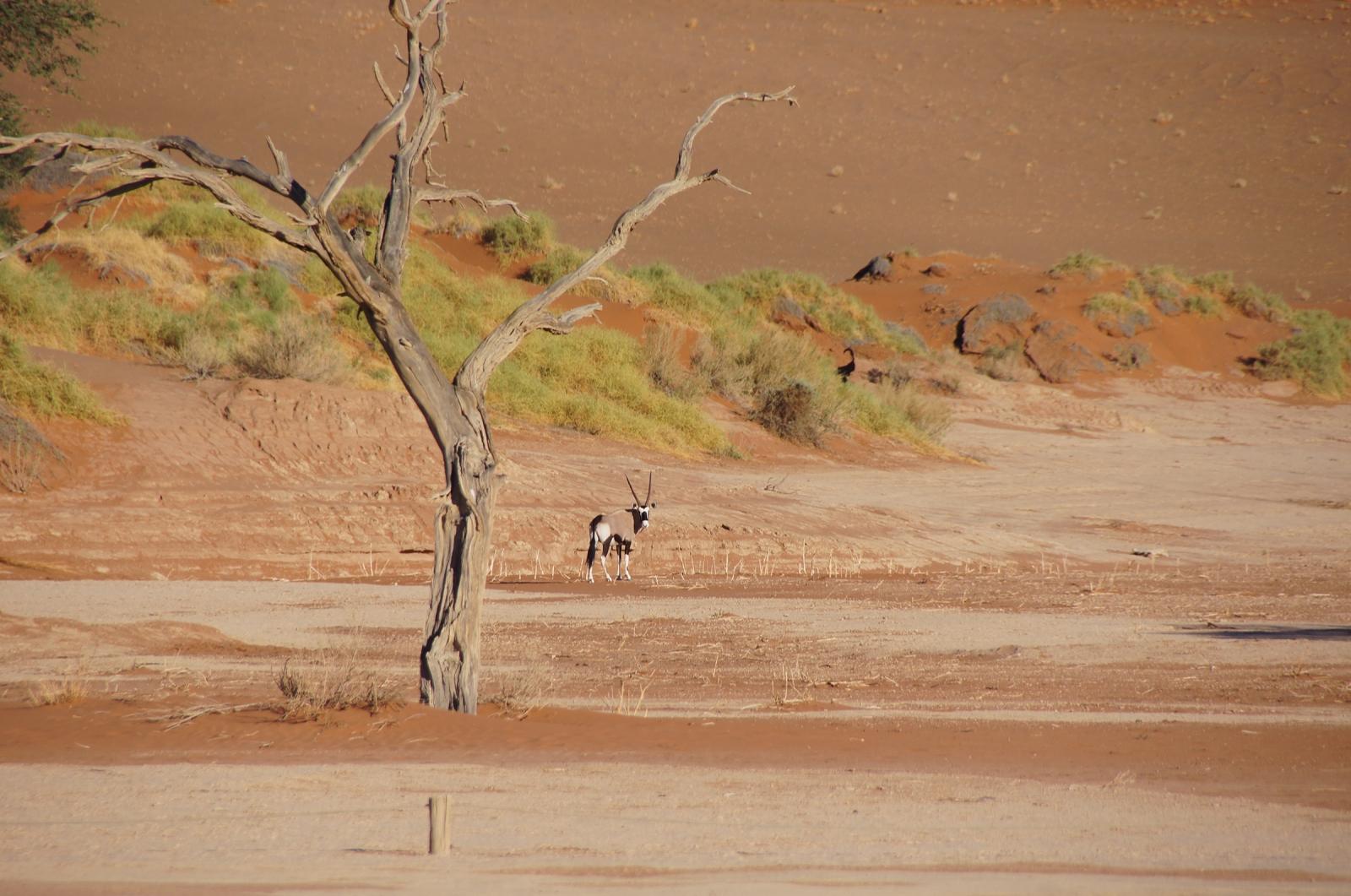 rainfall in desert