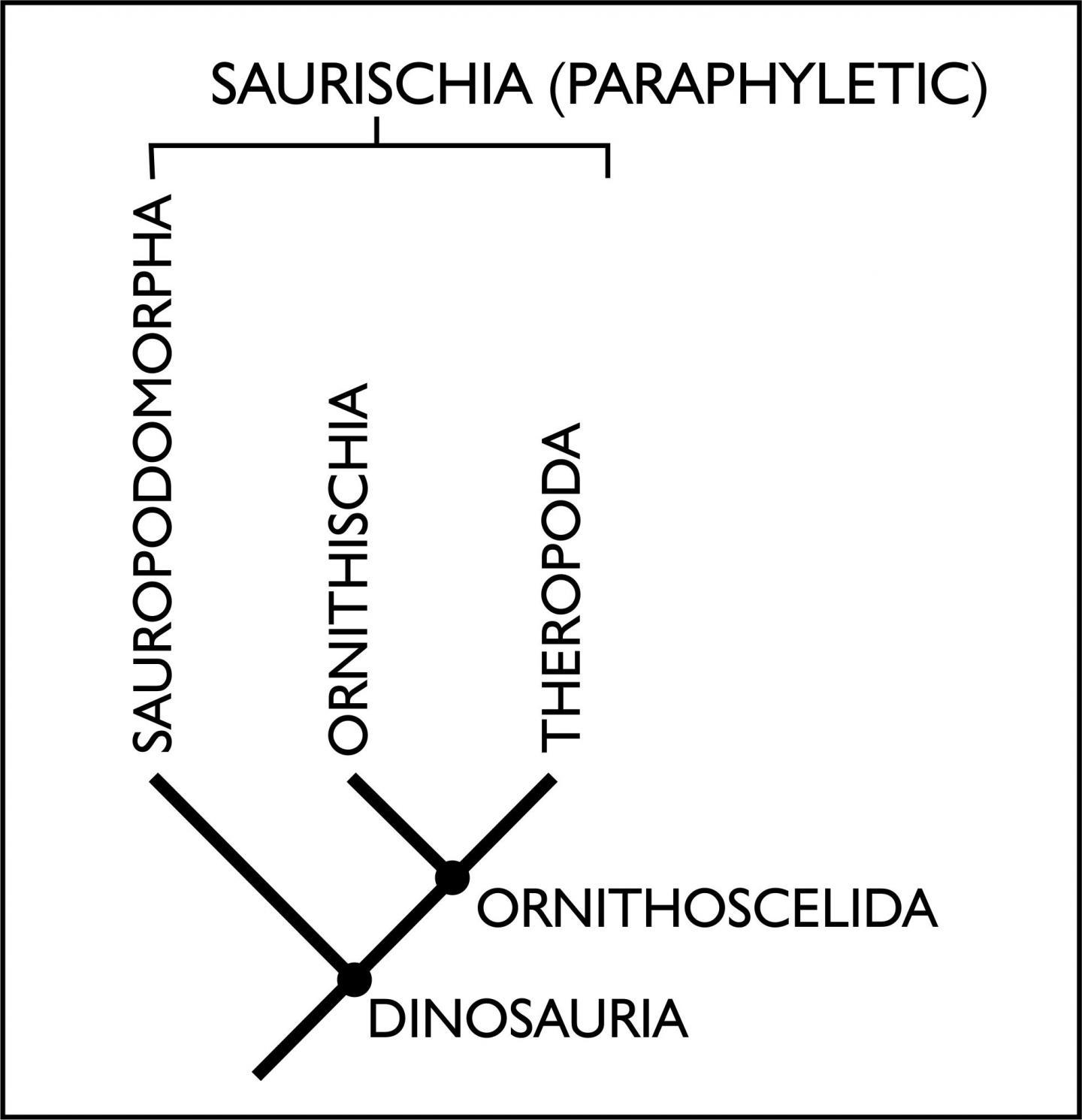 New family tree