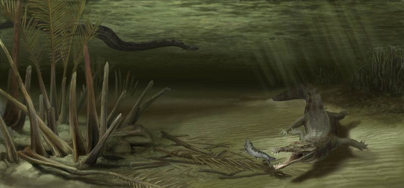 Giant Ancient Crocodile Uncovered in Colombia