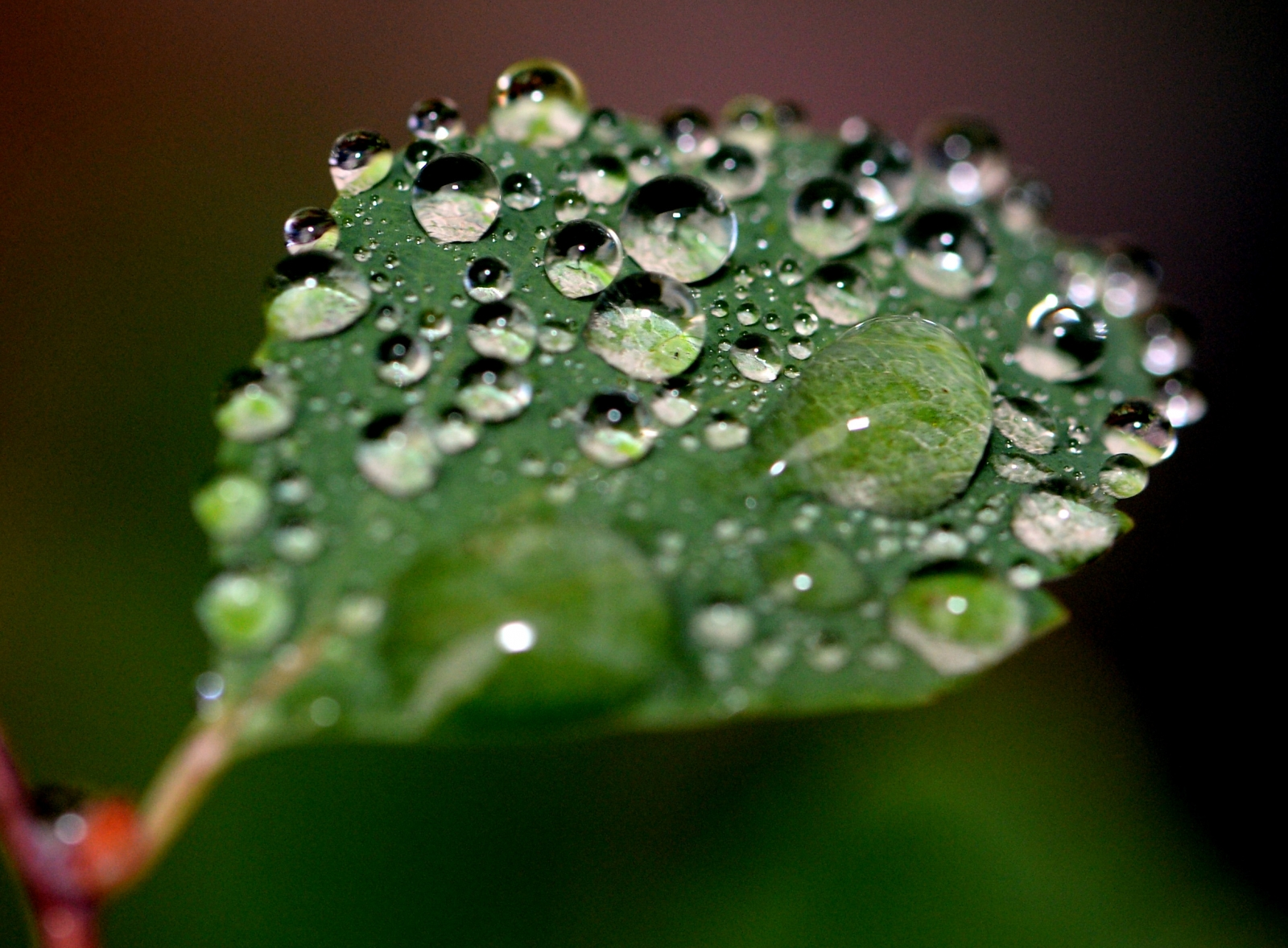 Droplets of water