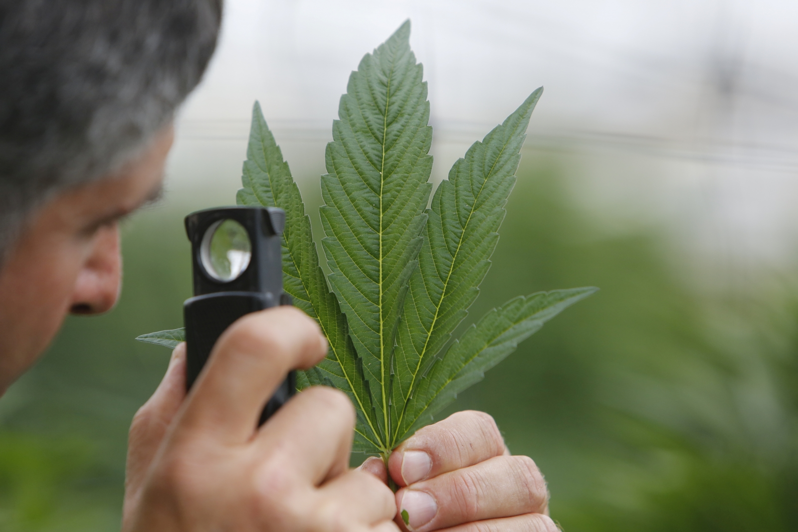 Canada Is About To Fully Legalise Marijuana