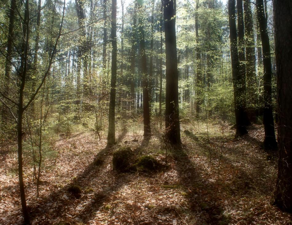 German Forest 1