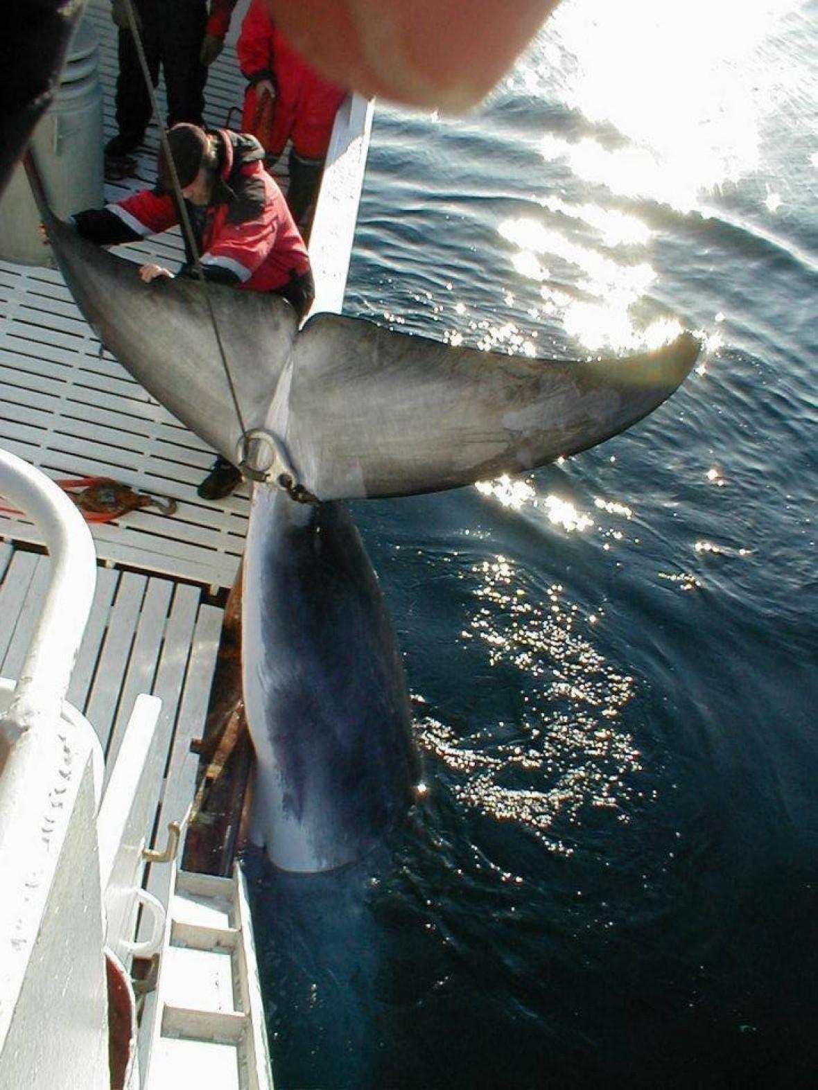 Norway whaling