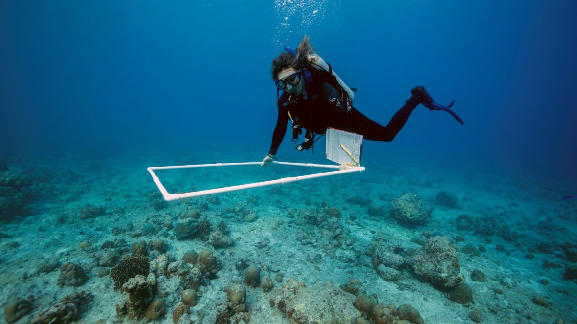 The traditional way to monitor coral reefs