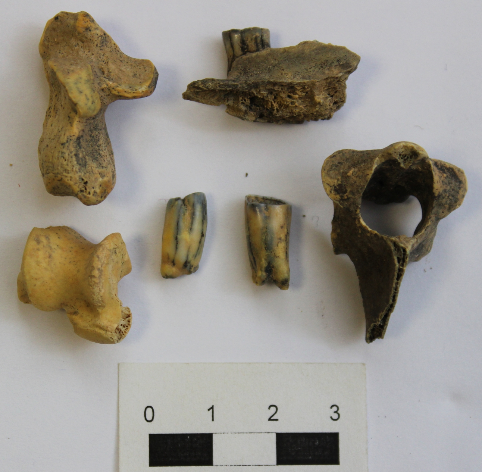 Methods used dating fossils 7