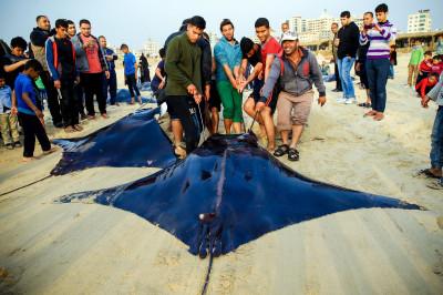 Gaza rays