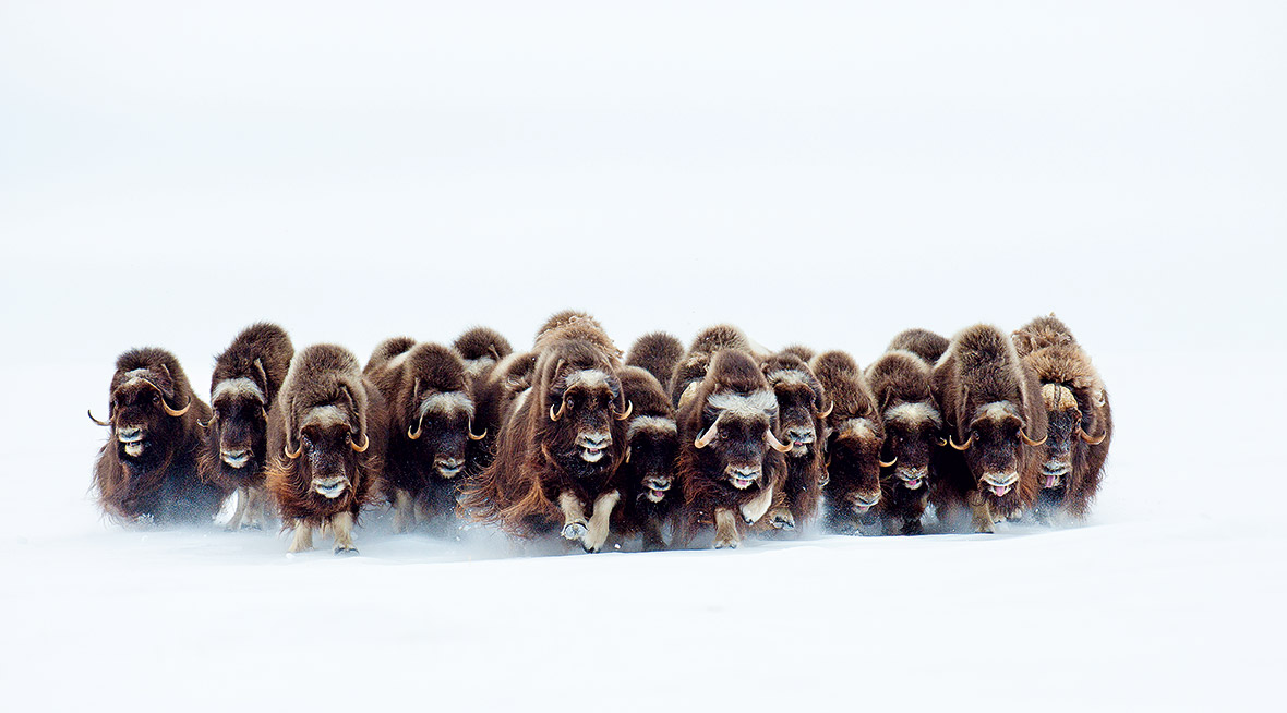 Wildlife Photographer of the Year Unforgettable Behaviour