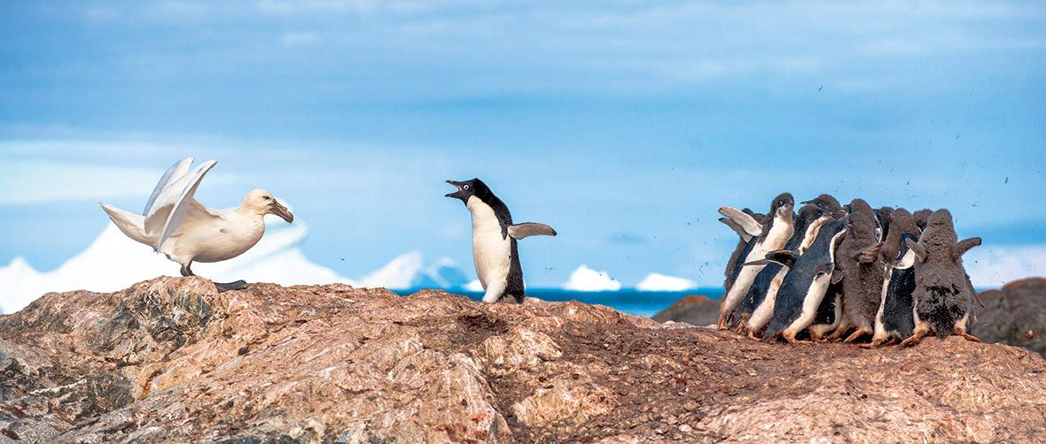 Wildlife Photographer of the Year: Unforgettable Behaviour