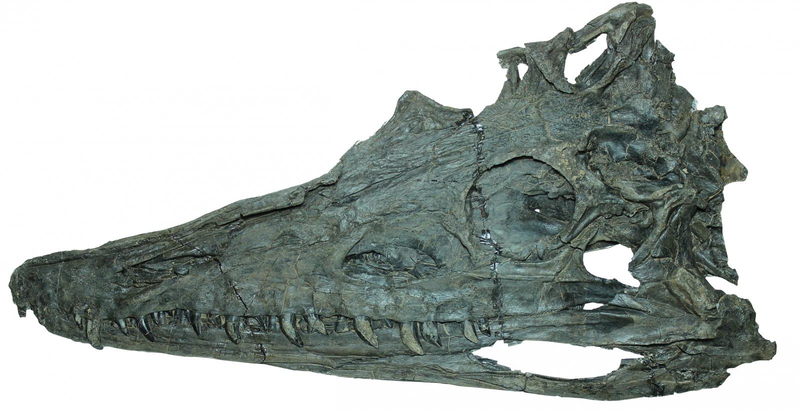 Diandongosuchus fuyuanensis