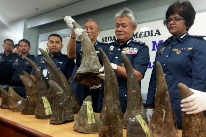 Rhino horns