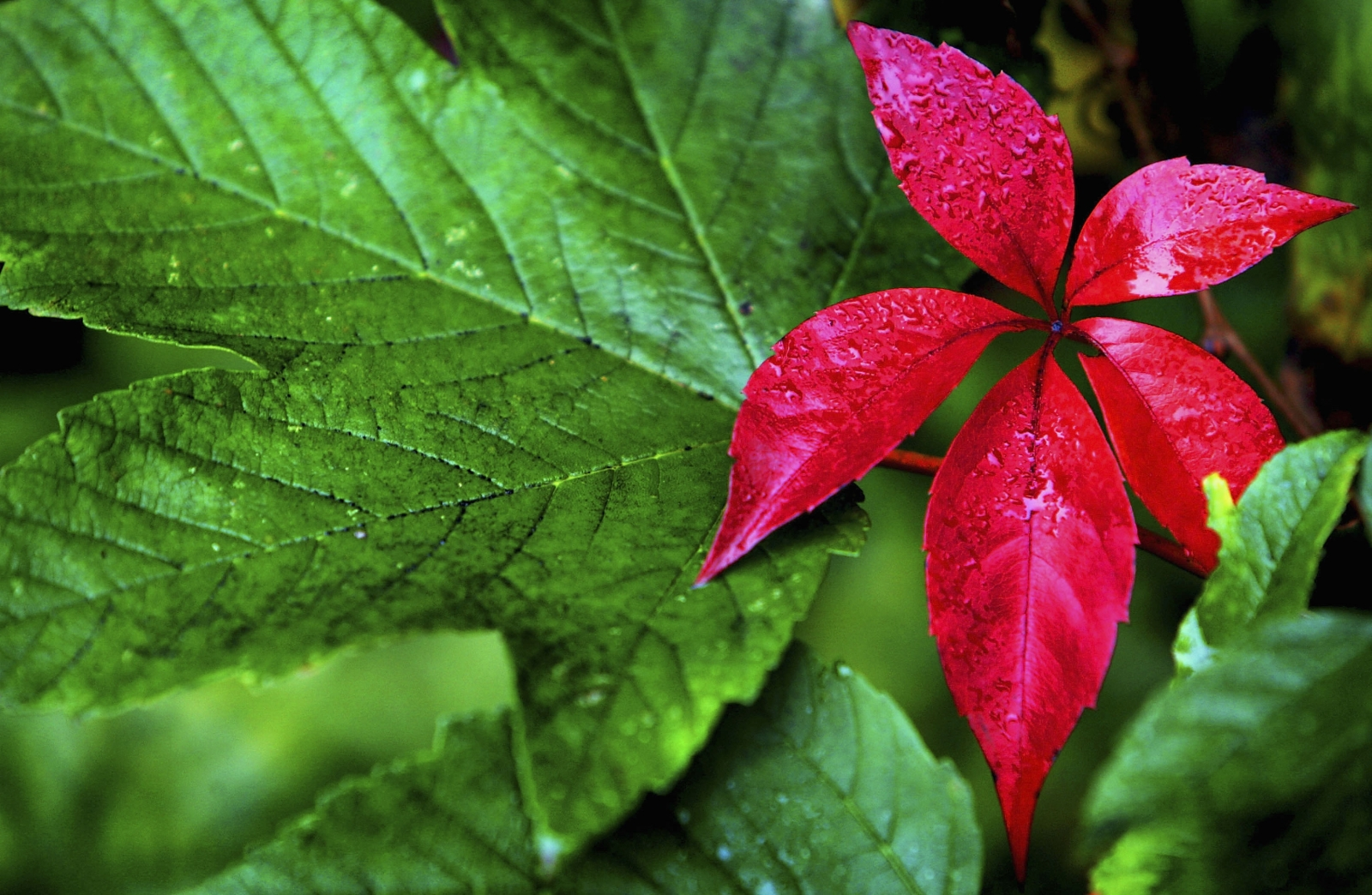 Leaf veins could extend battery life