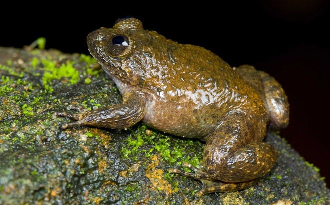 Dinosaur extinction paved the way for an explosion of frog life