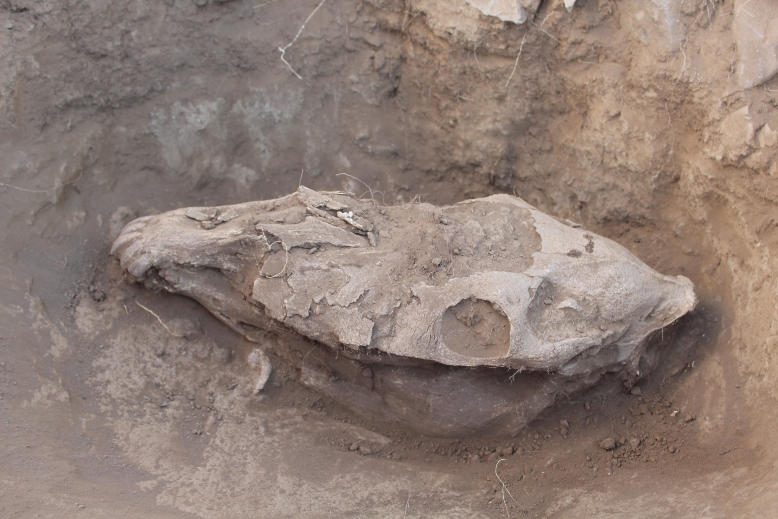 Horse burial