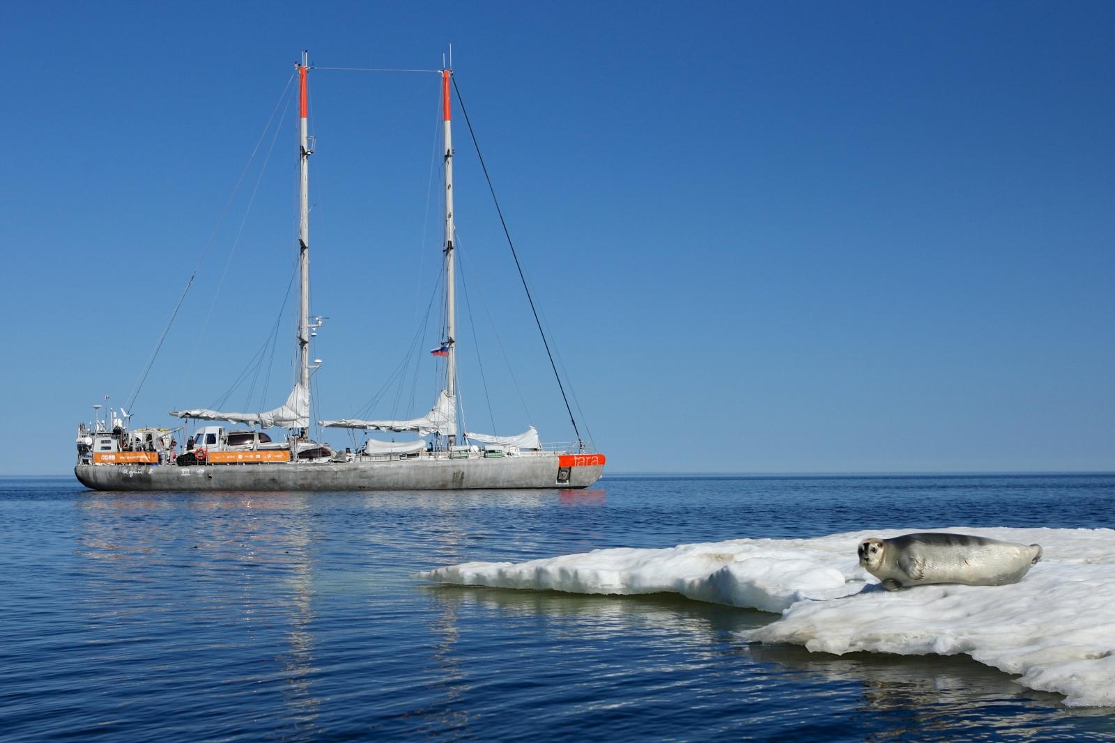 Arctic plastic