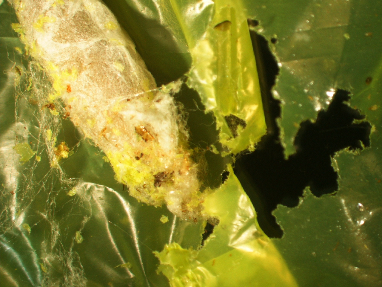 Plastic-eating caterpillar offers waste solution