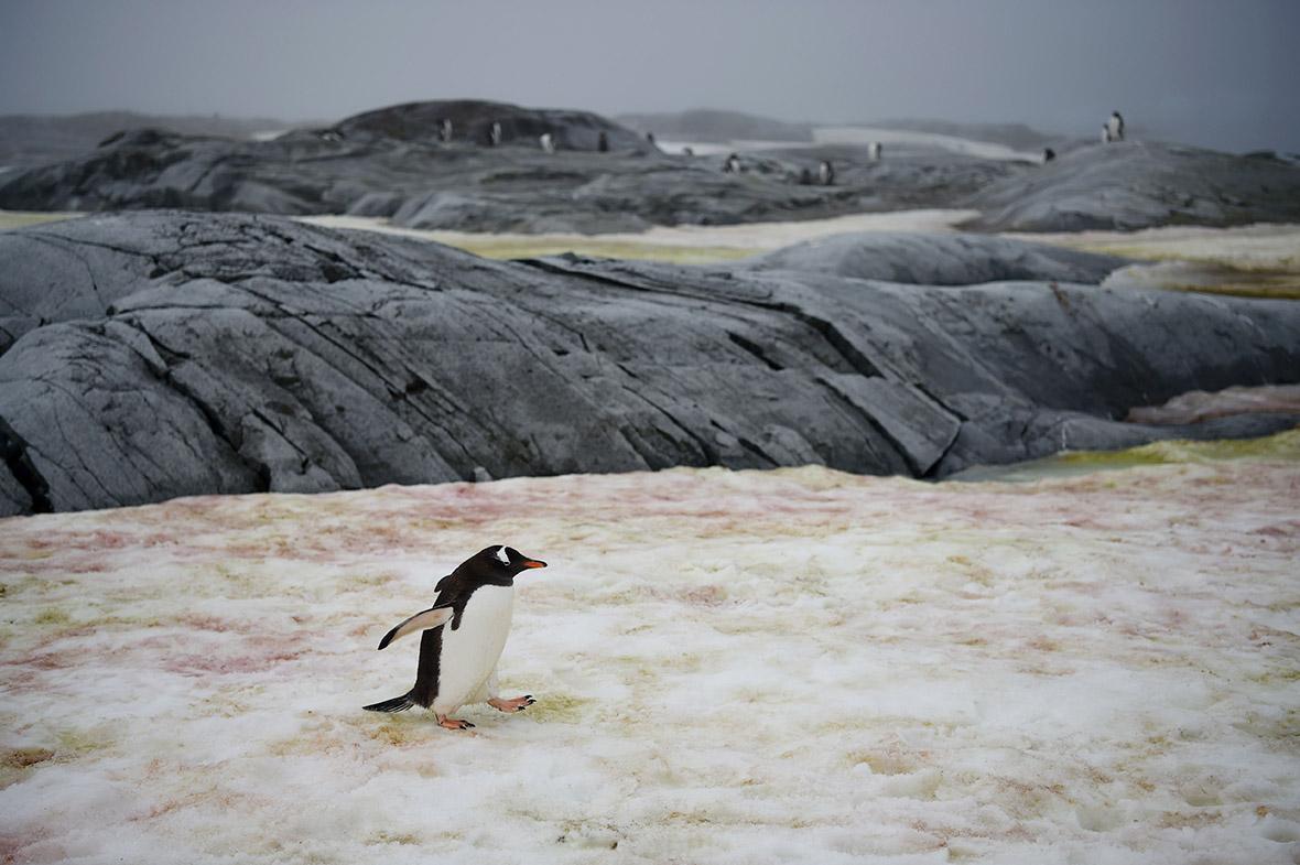 World Penguin Day 2017