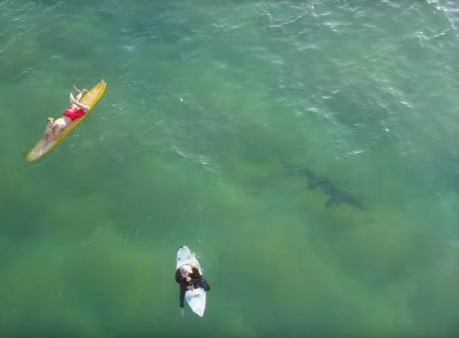 Shark swims under surfers