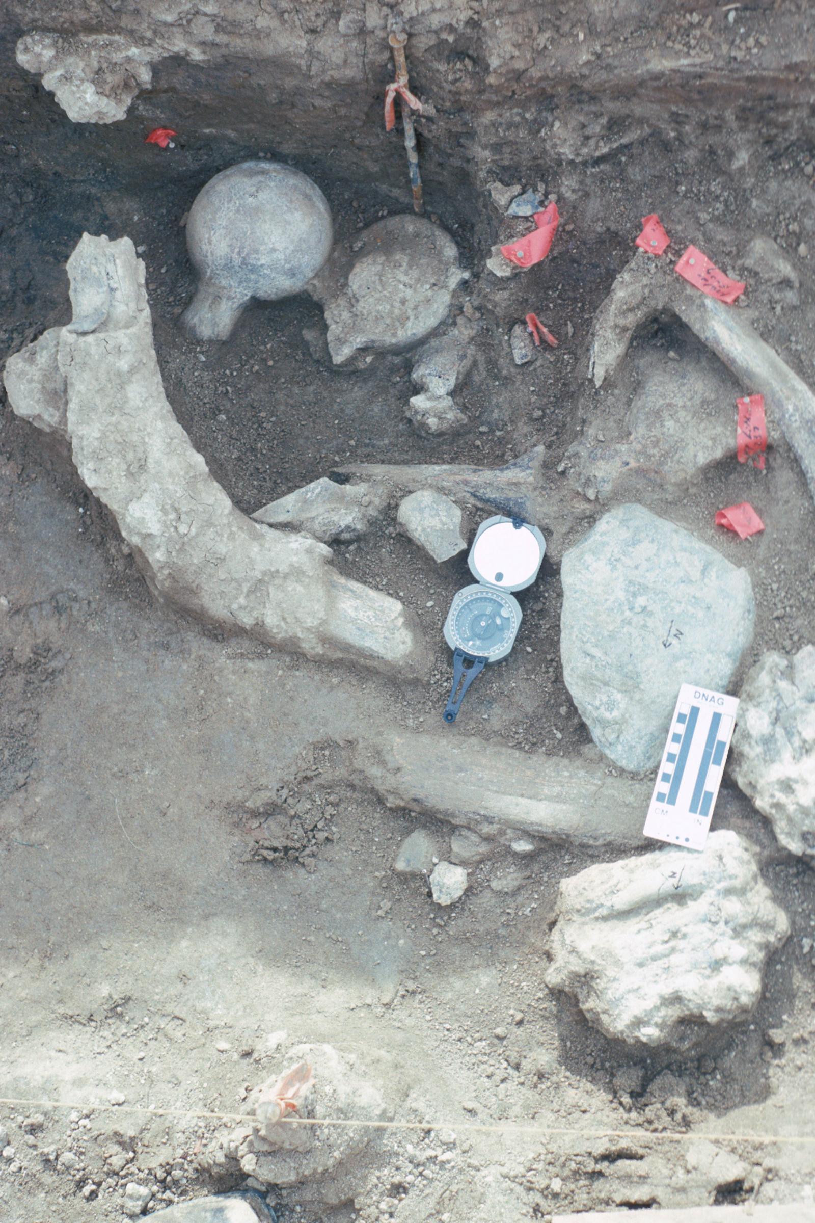 Mastodon site