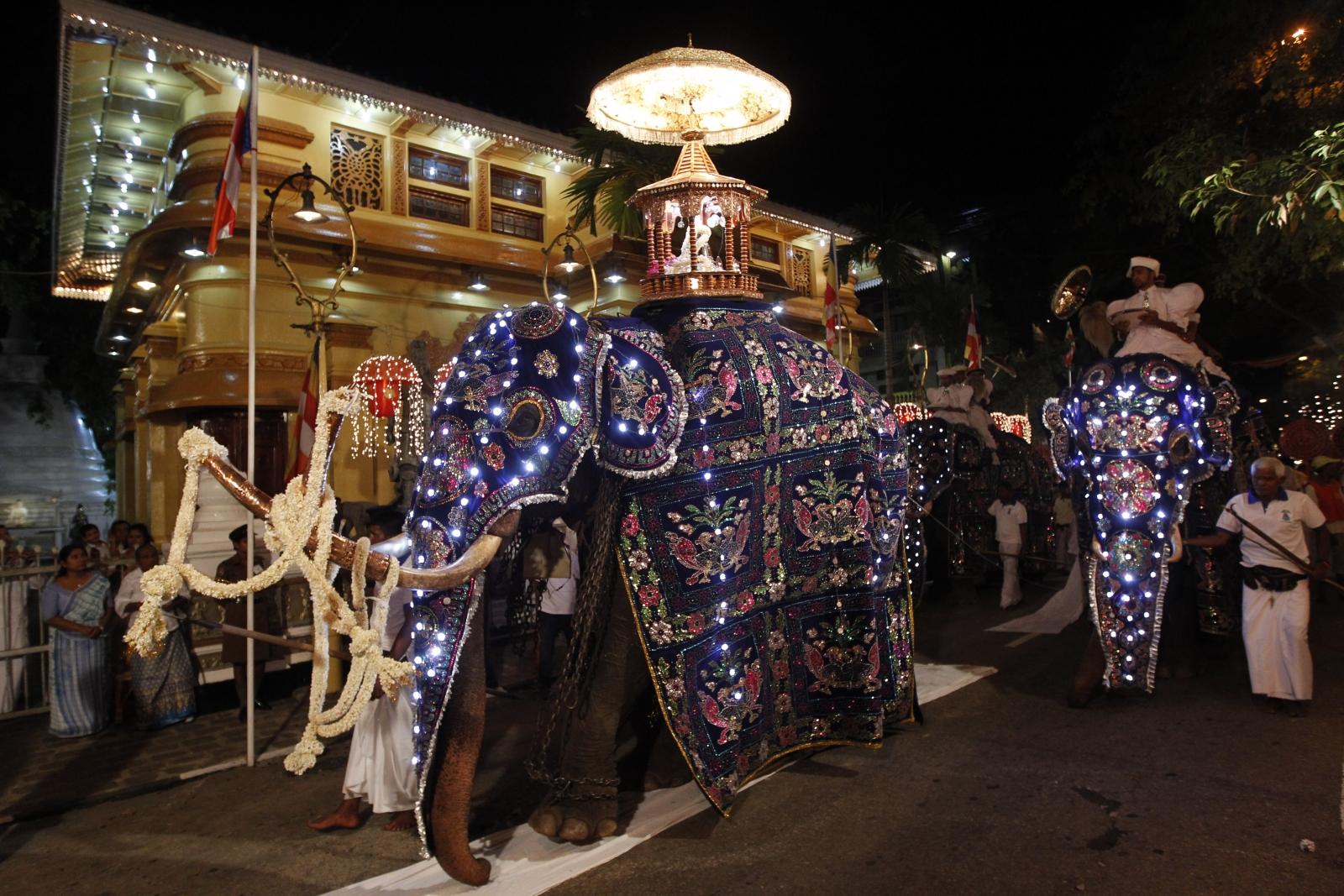 elephant orphans for adoption sri lanka
