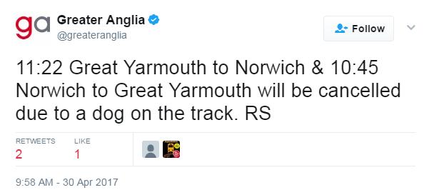 Dog on track