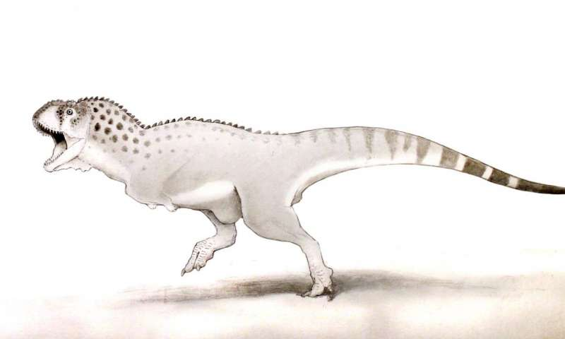 Africa T rex