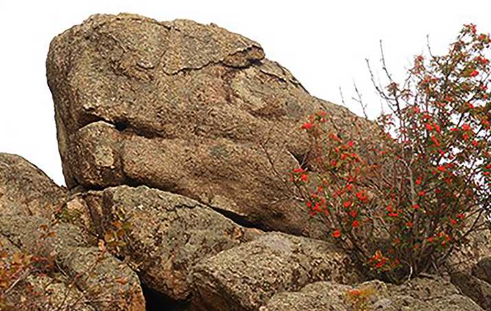 dragon megalith