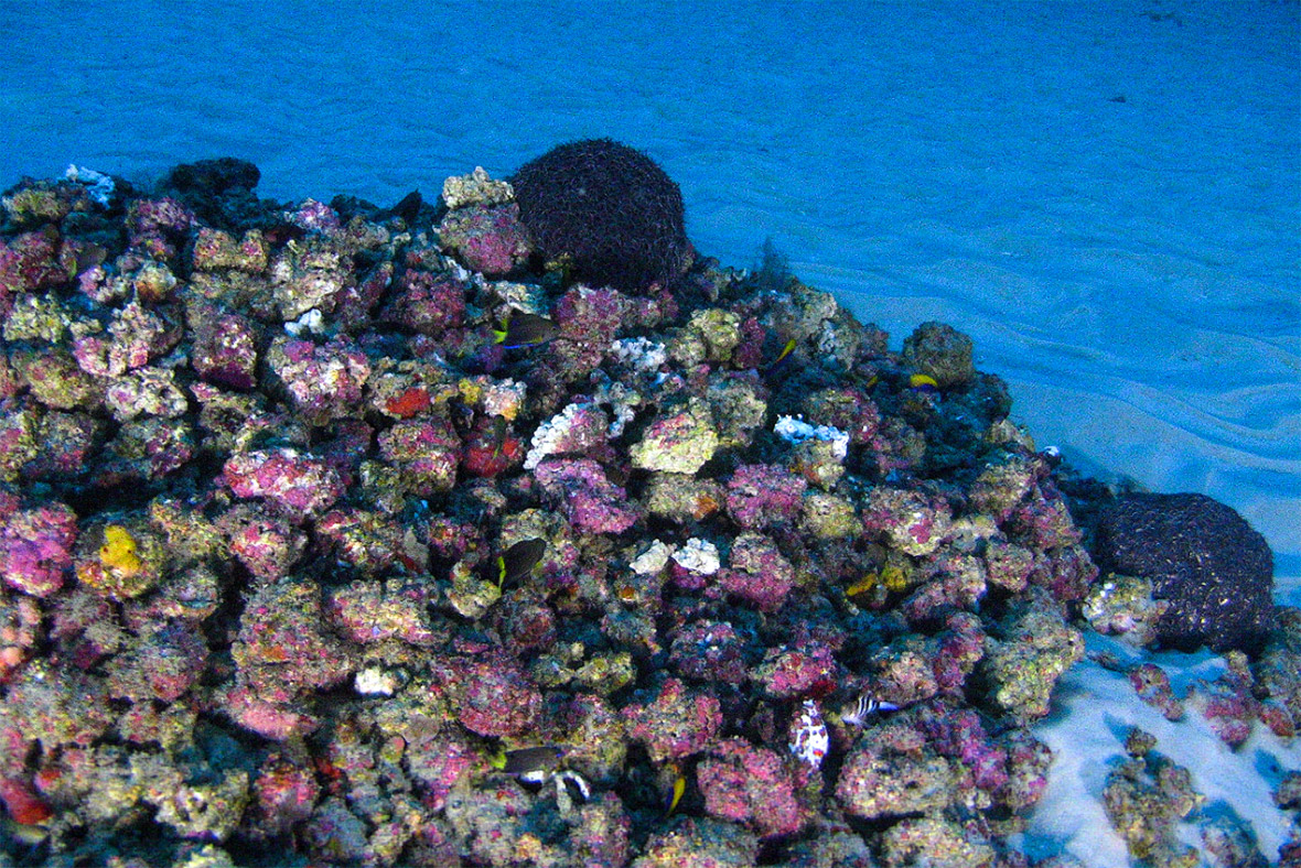 Amazon coral reef Total oil