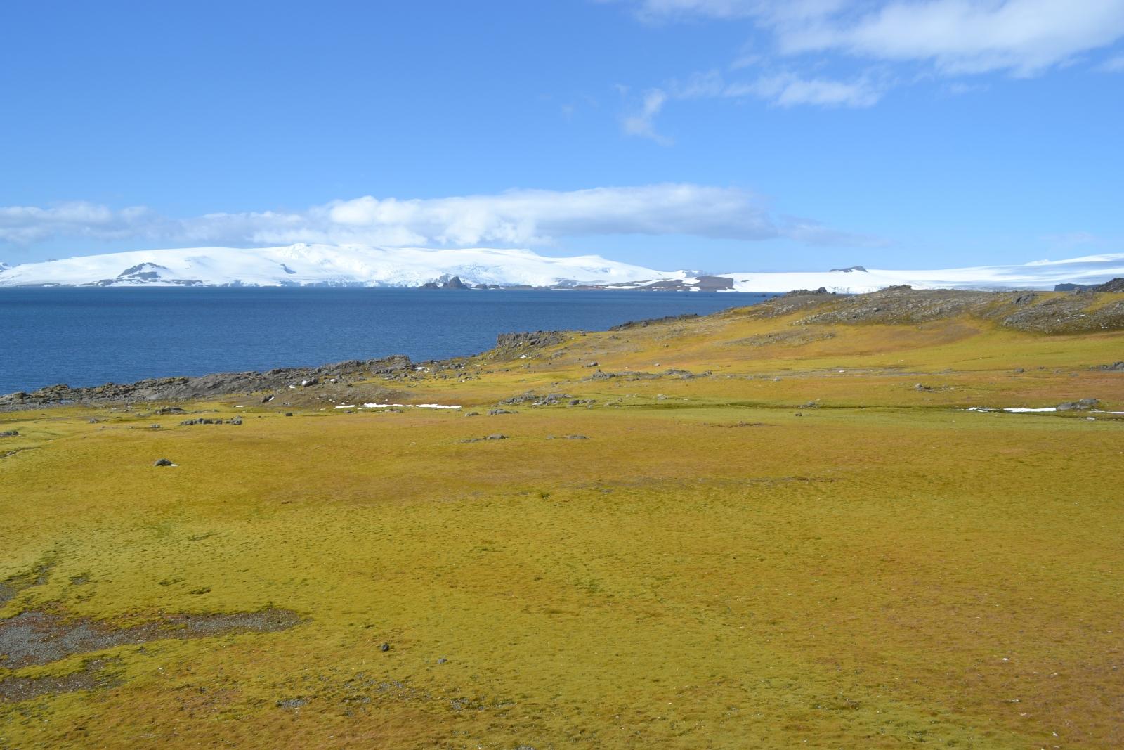 Antarctic moss
