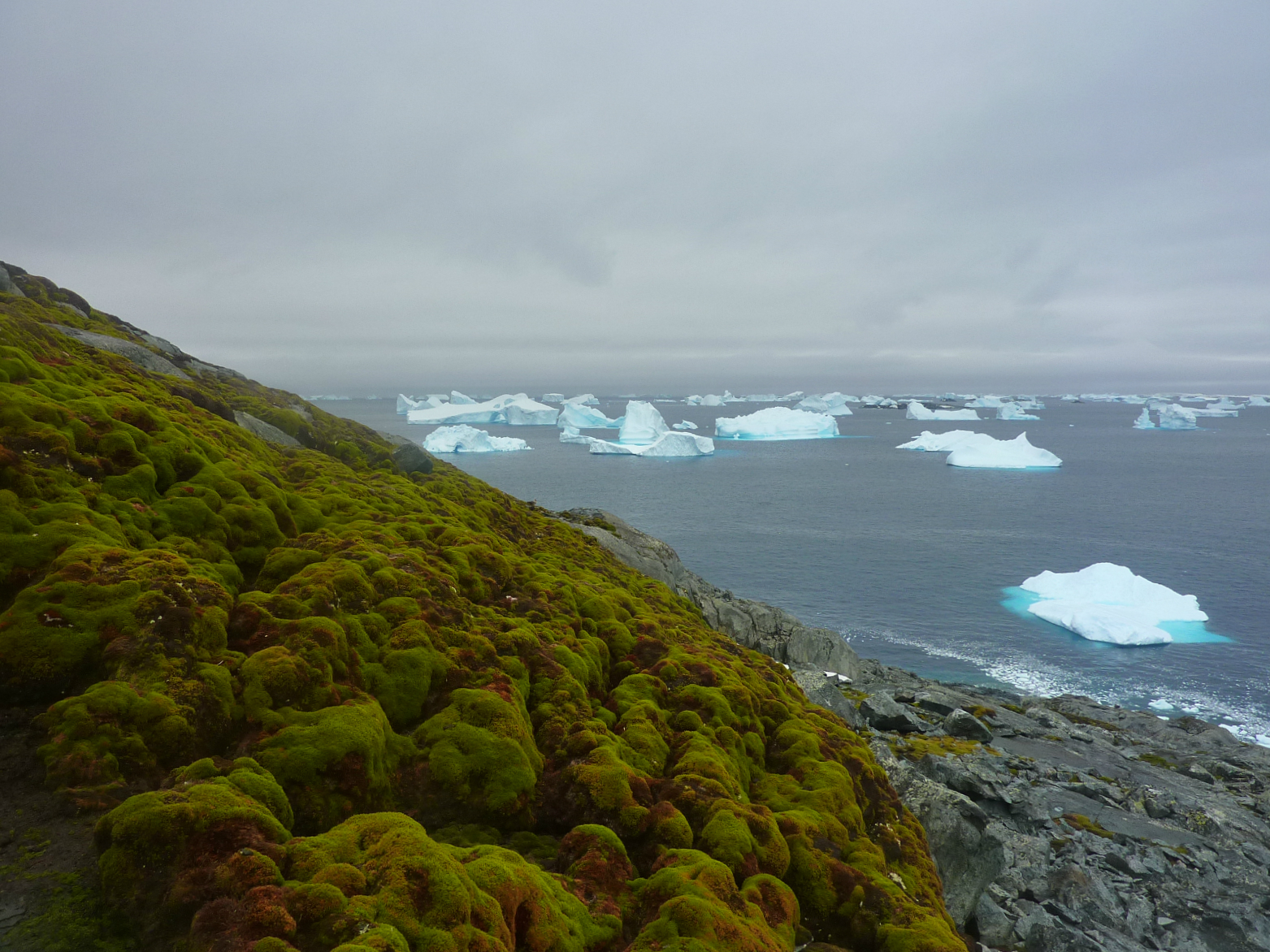 Antarctica began to rapidly become covered with moss