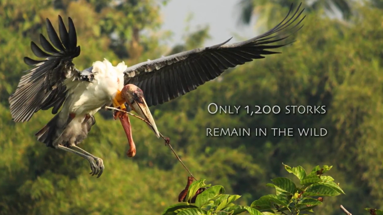 listen-to-david-attenborough-on-indian-womens-plight-to-save-huge-carnivorous-storks