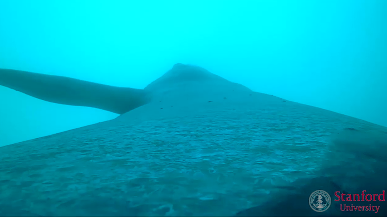 watch-rare-footage-of-a-blue-whale-feeding-in-the-pacific-ocean