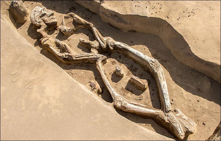 Siberia skeleton
