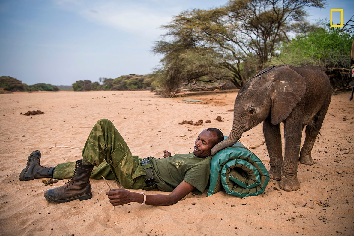 Elephant sanctuary Kenya