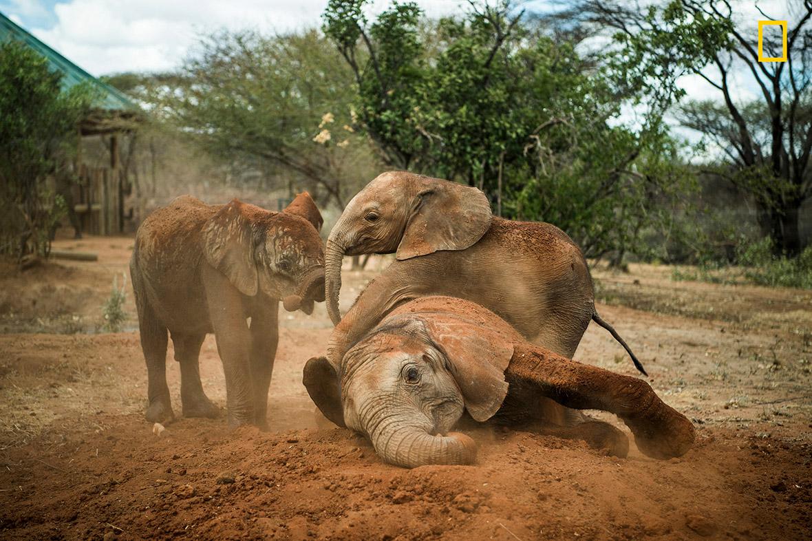 Elephant sanctuary Kenya