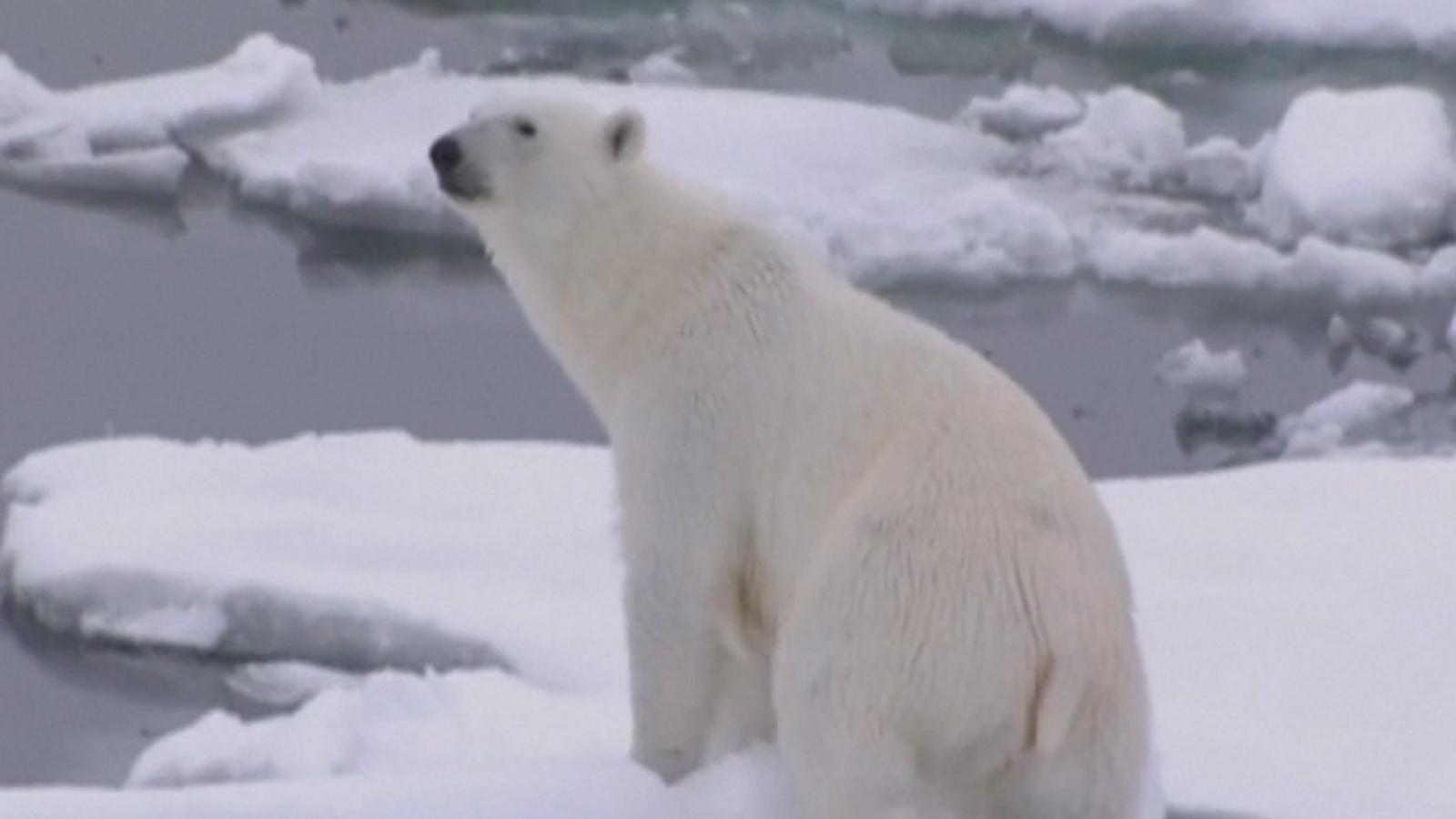 donald-trump-pulls-u-s-out-of-paris-climate-agreement
