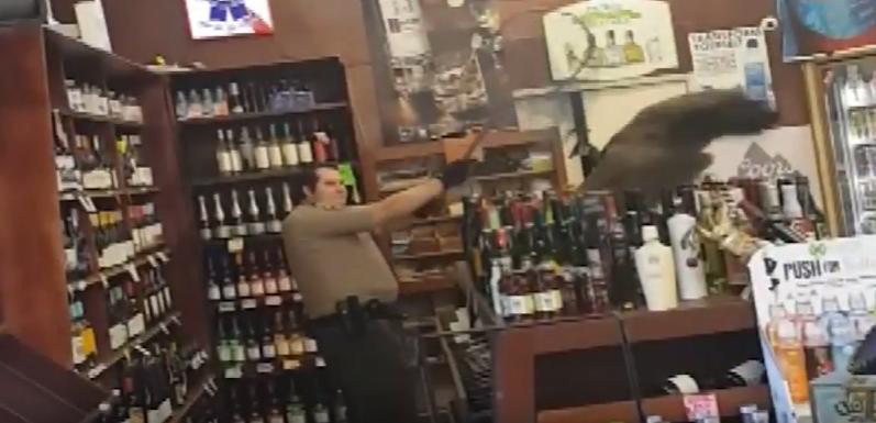 peacock damages liquor worth $500 in California store