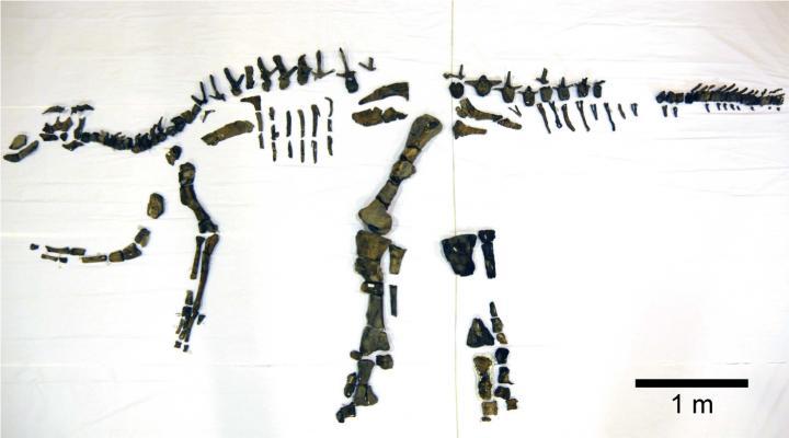 Complete dinosaur skeleton discovered in Japan