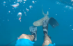 Man attacked by shark in Florida