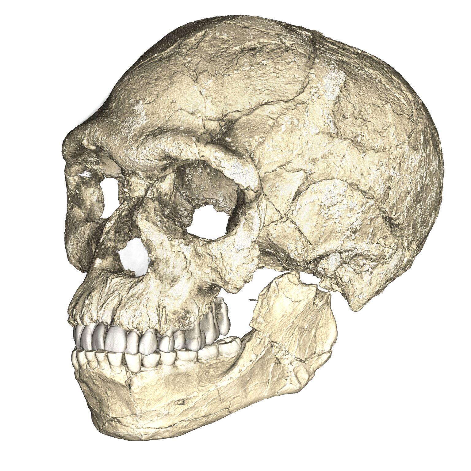 Earliest Homo sapiens