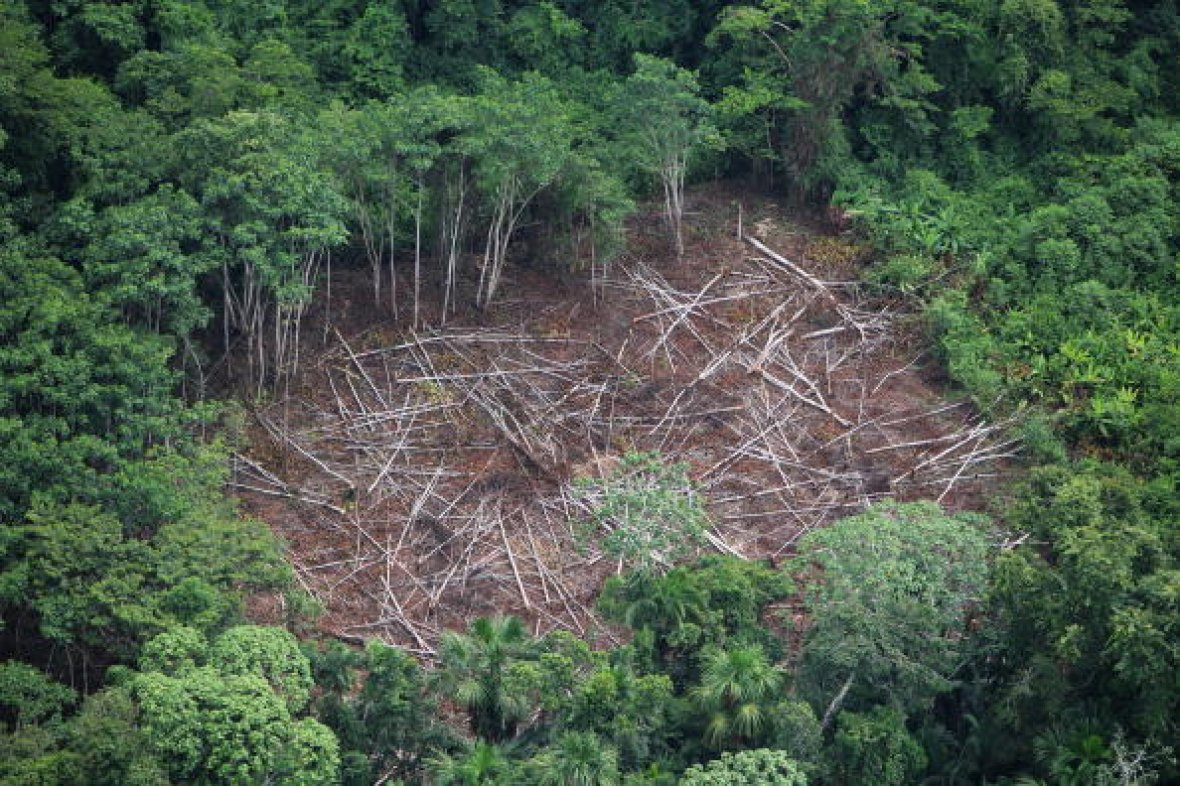 the threatened amazon rainforest The amazon rainforest is now capturing one third less of the carbon in our atmosphere than it did just ten years ago, and losing an alarming number of trees each year.