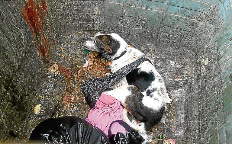 Dog in bin
