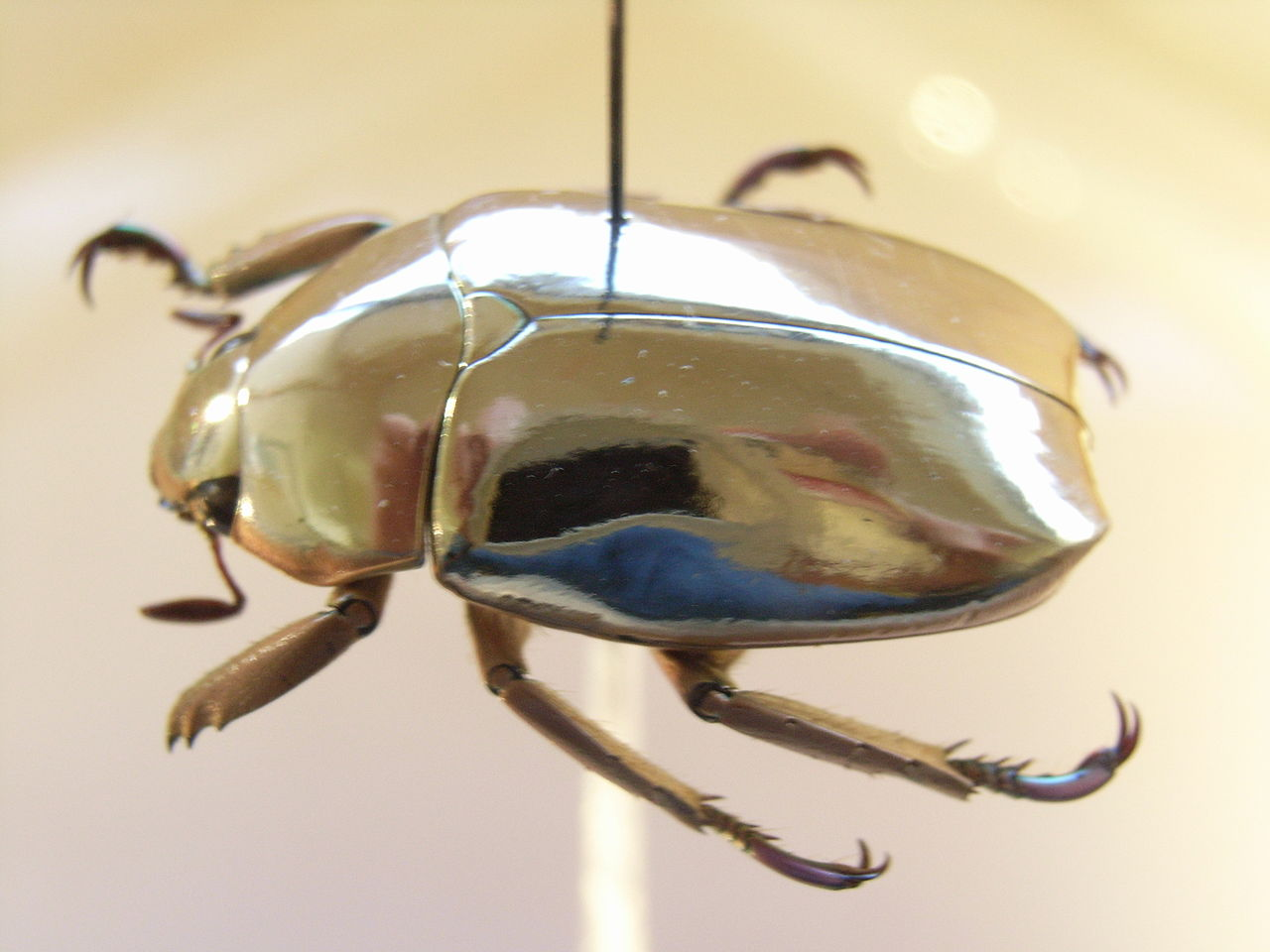 Jewel scarab