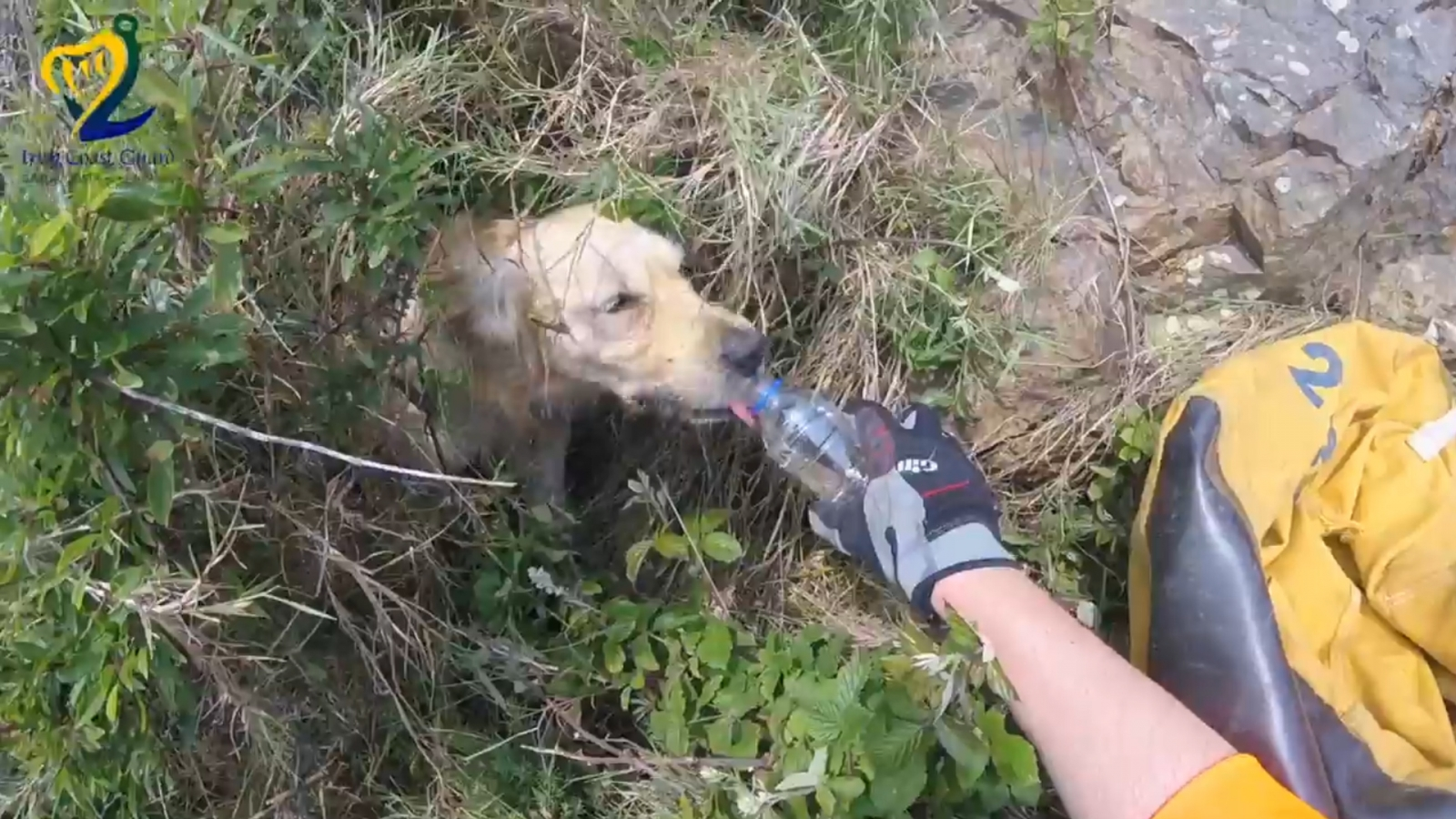 watch-the-moment-a-stranded-dog-is-rescued-after-falling-down-a-15ft-cliff