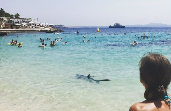 Shark spotted in Majorca