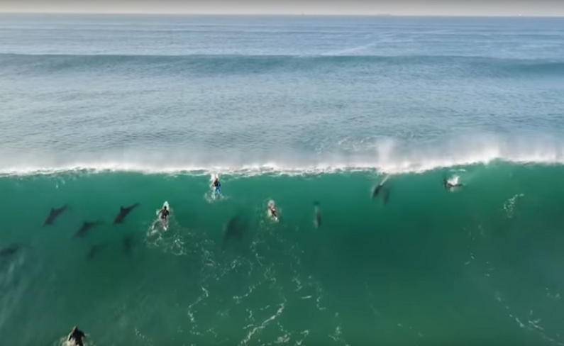 Dolphins join surfers